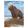 Royal & Langnickel Paint By Numbers Grizzly Bear